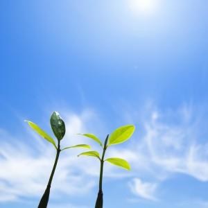 太陽と新芽2